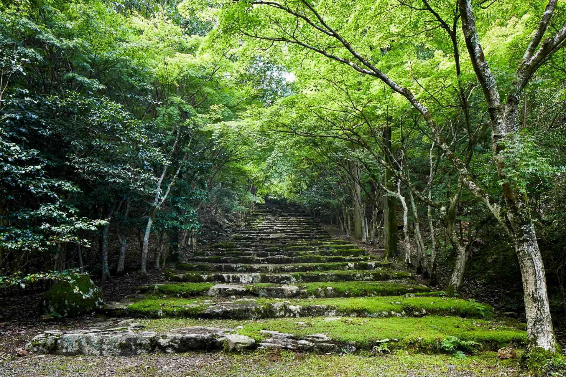 Enfin, Aman Kyoto permet de profiter de la quiétude de trois hectares de jardins, eux-mêmes entourés de près de 30 hectares de forêt