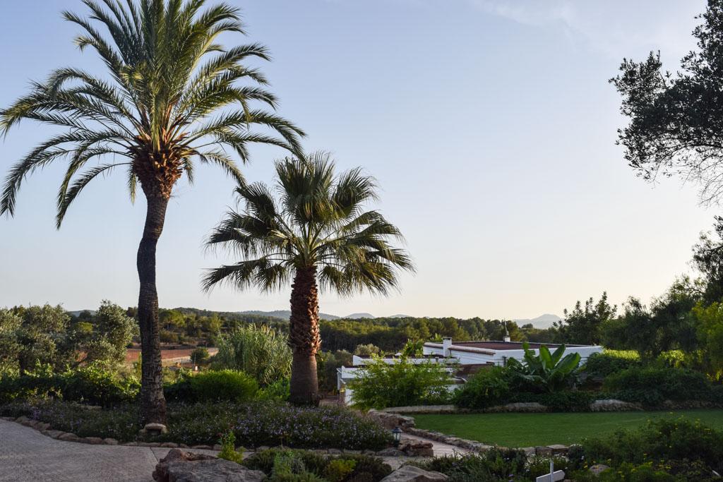 Palmiers dans le jardin de l'hôtel | © Yonder