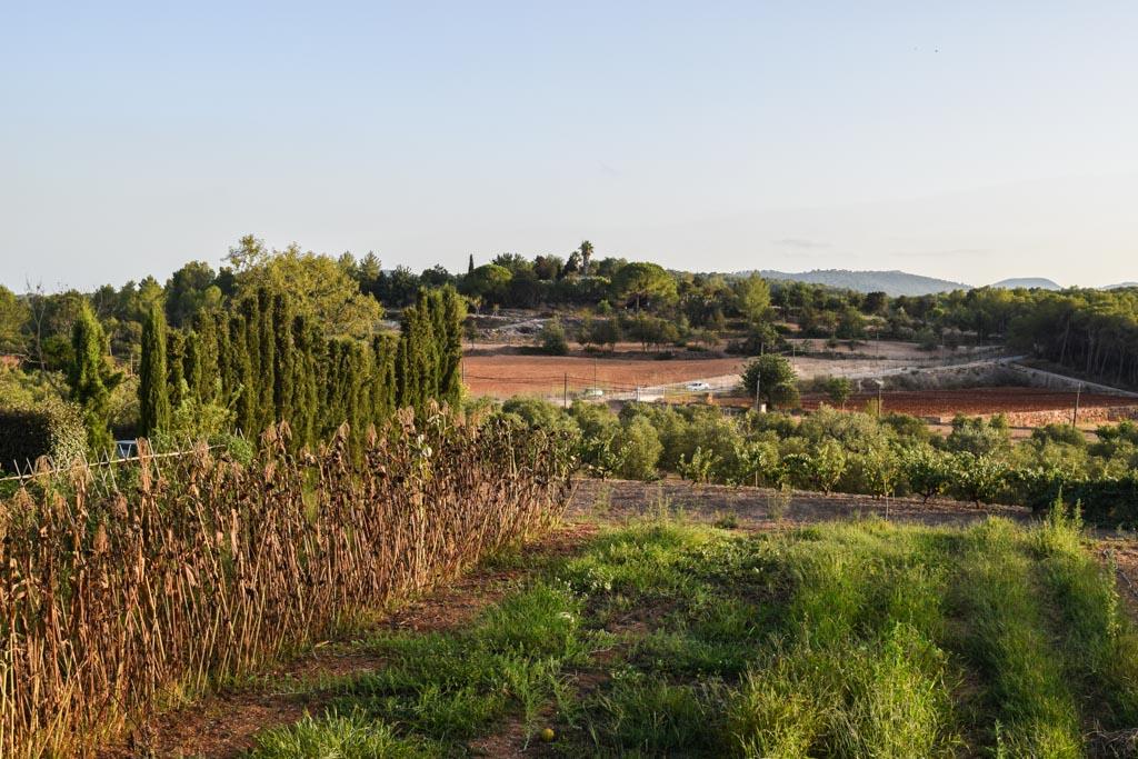 Autour de l'hôtel, des champs d'oliviers et des vergers | © Yonder