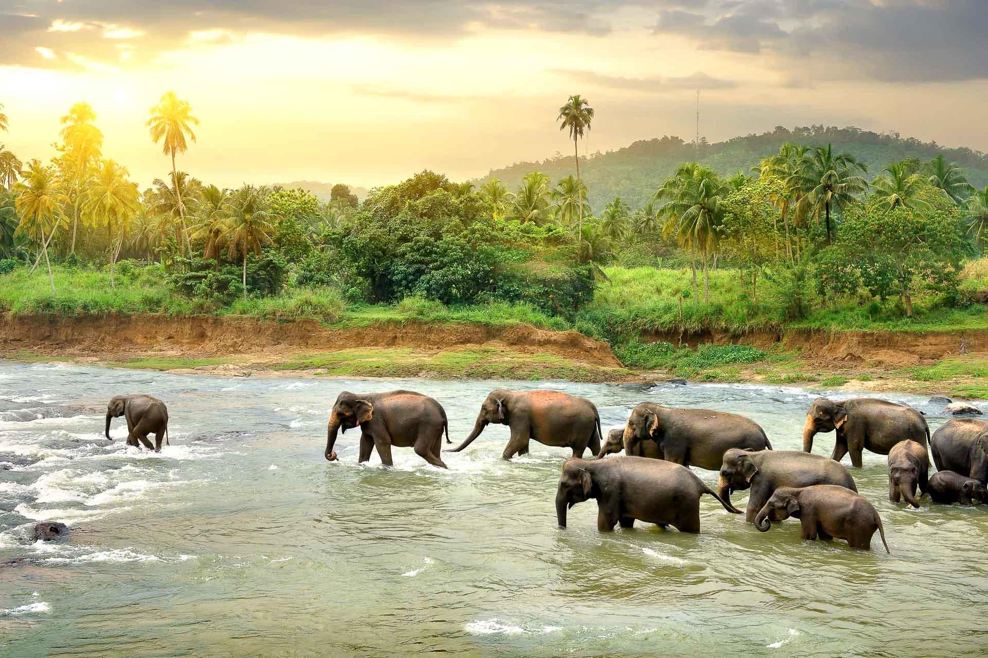 Sri Lanka - Cérémonie du bain des éléphants © DR