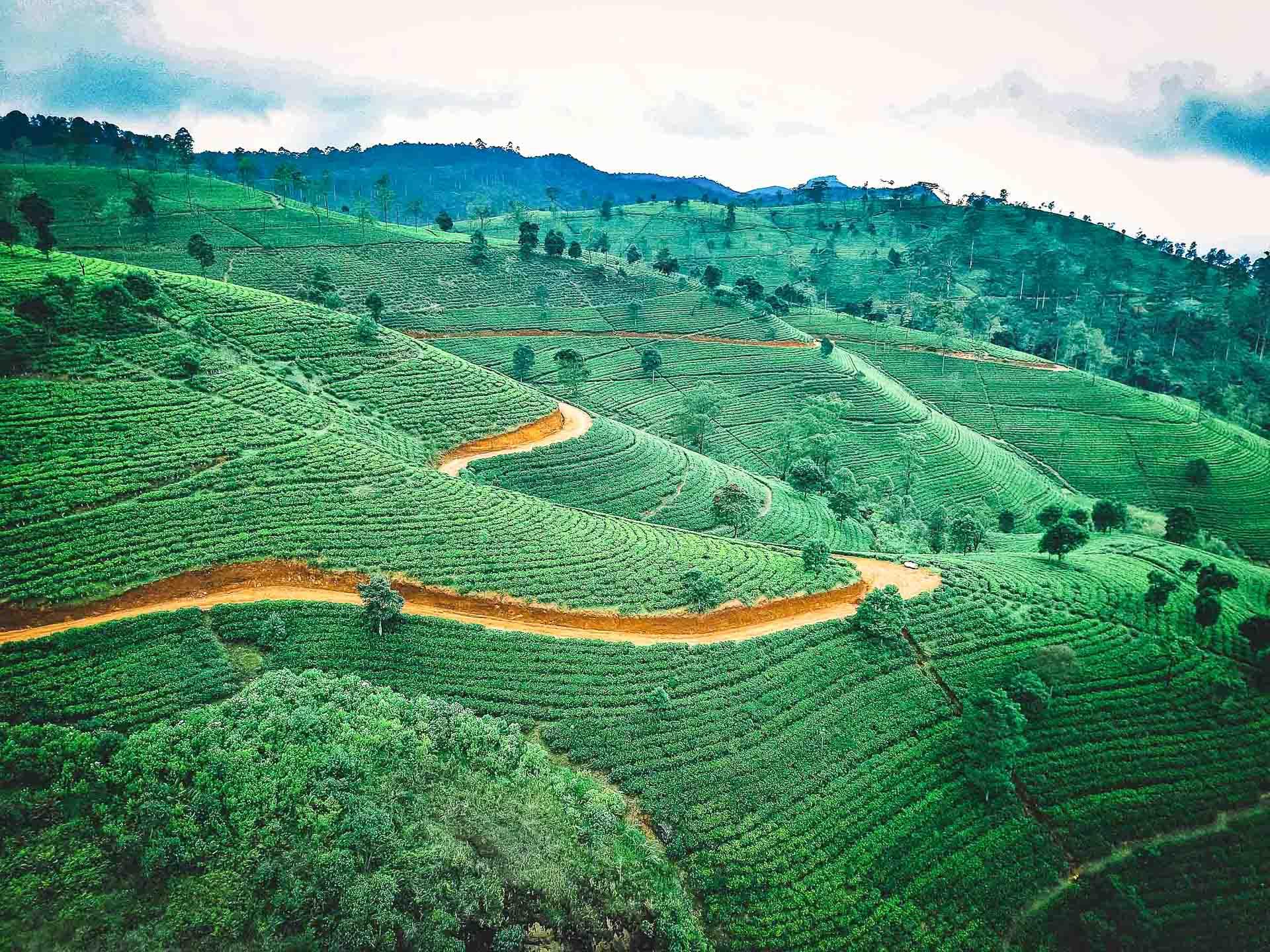 Sri Lanka - Route des thés