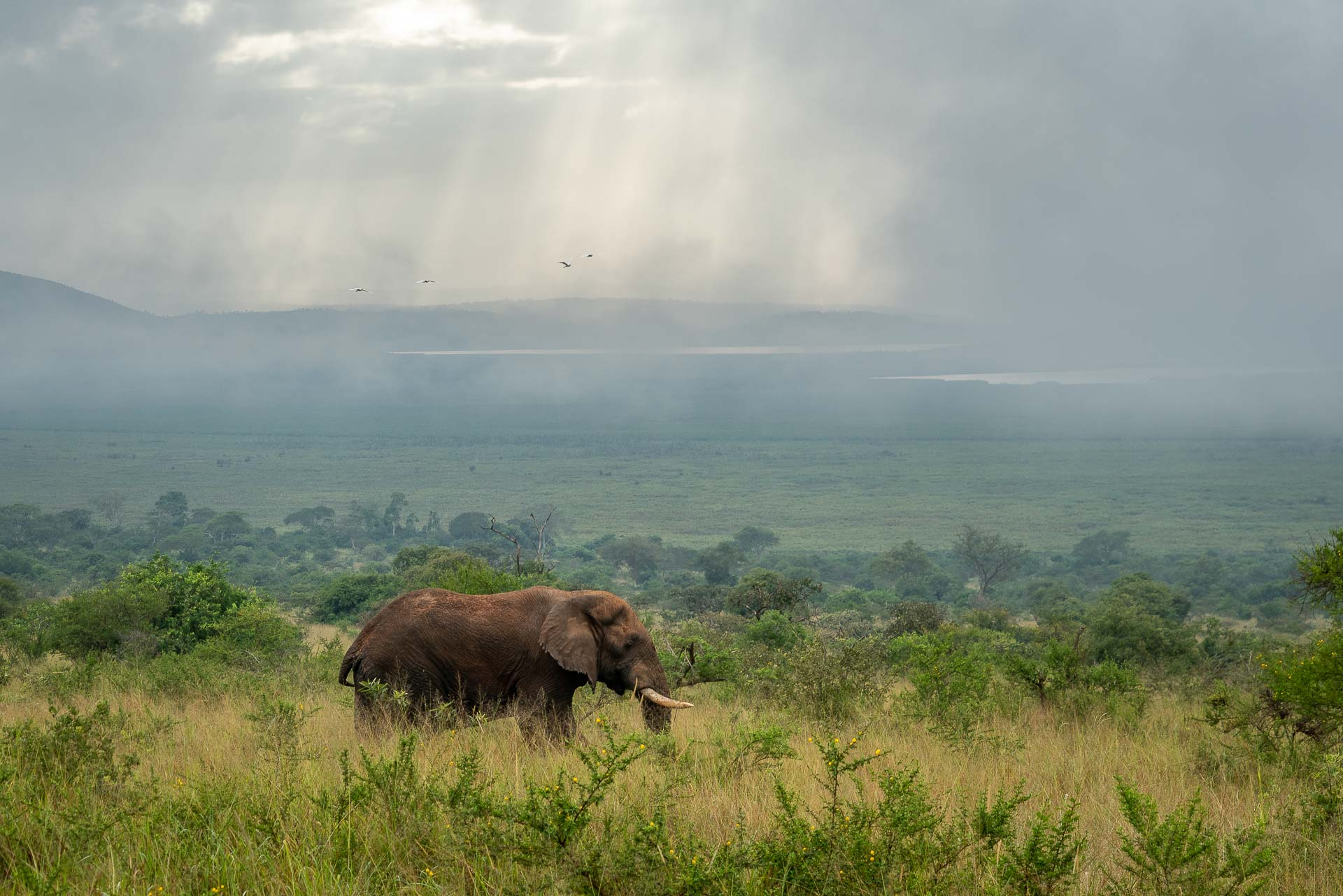 Rwanda – Parc national de l'Akagera © DR