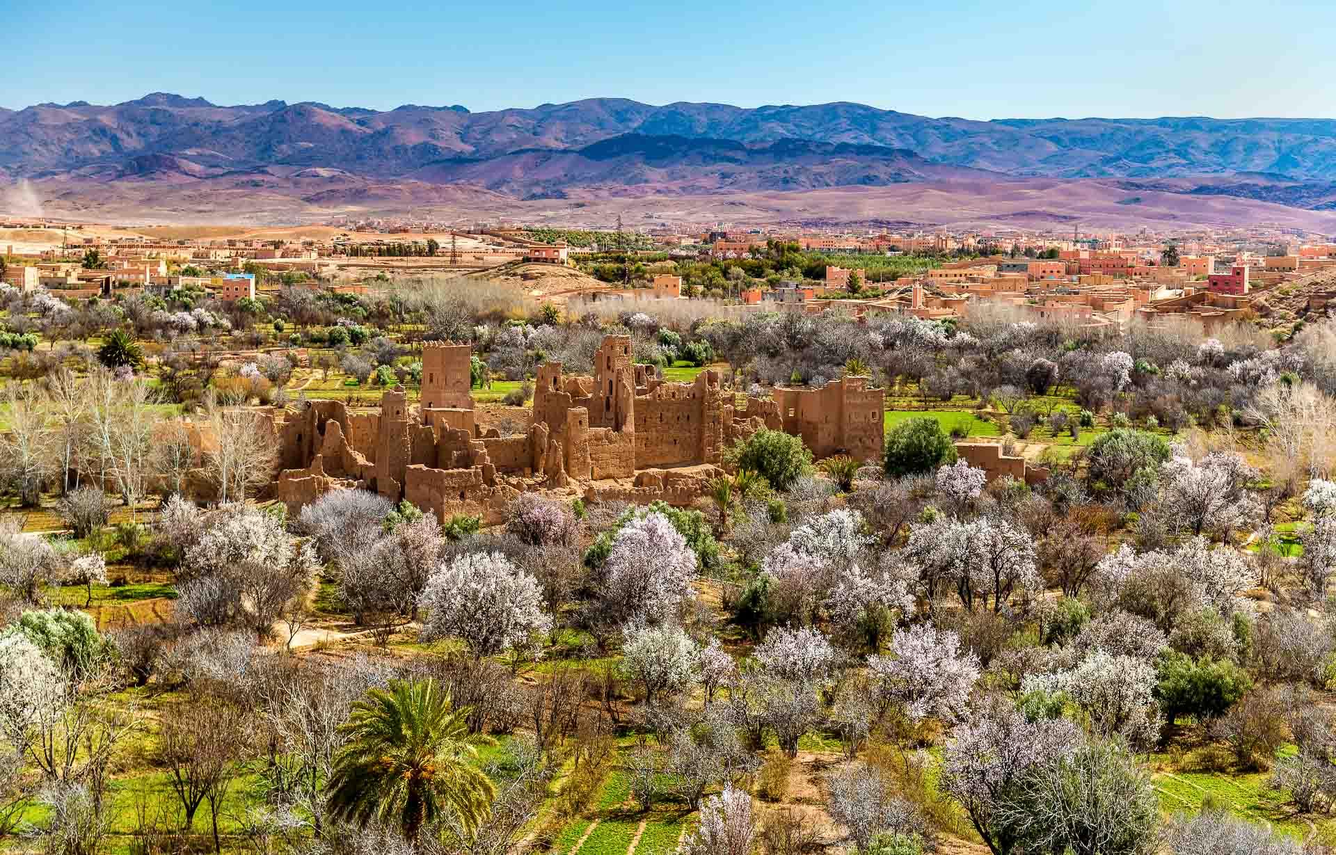 Maroc - Vallée des Roses © DR