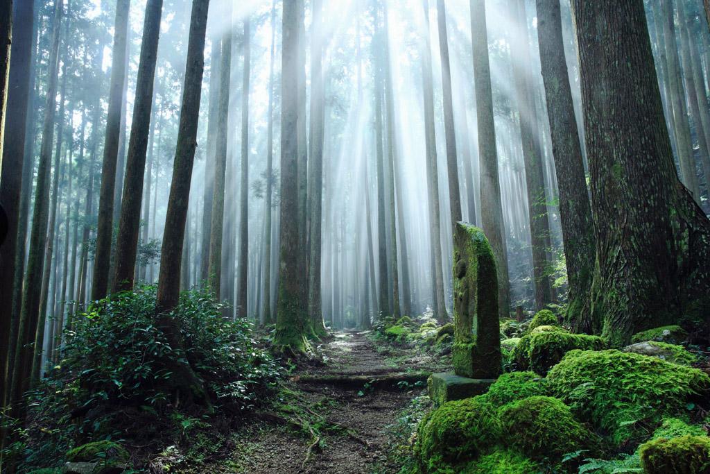 Amanemu - Forêt