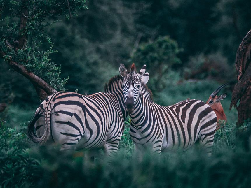 Tanzani - Safari nocturne © DR