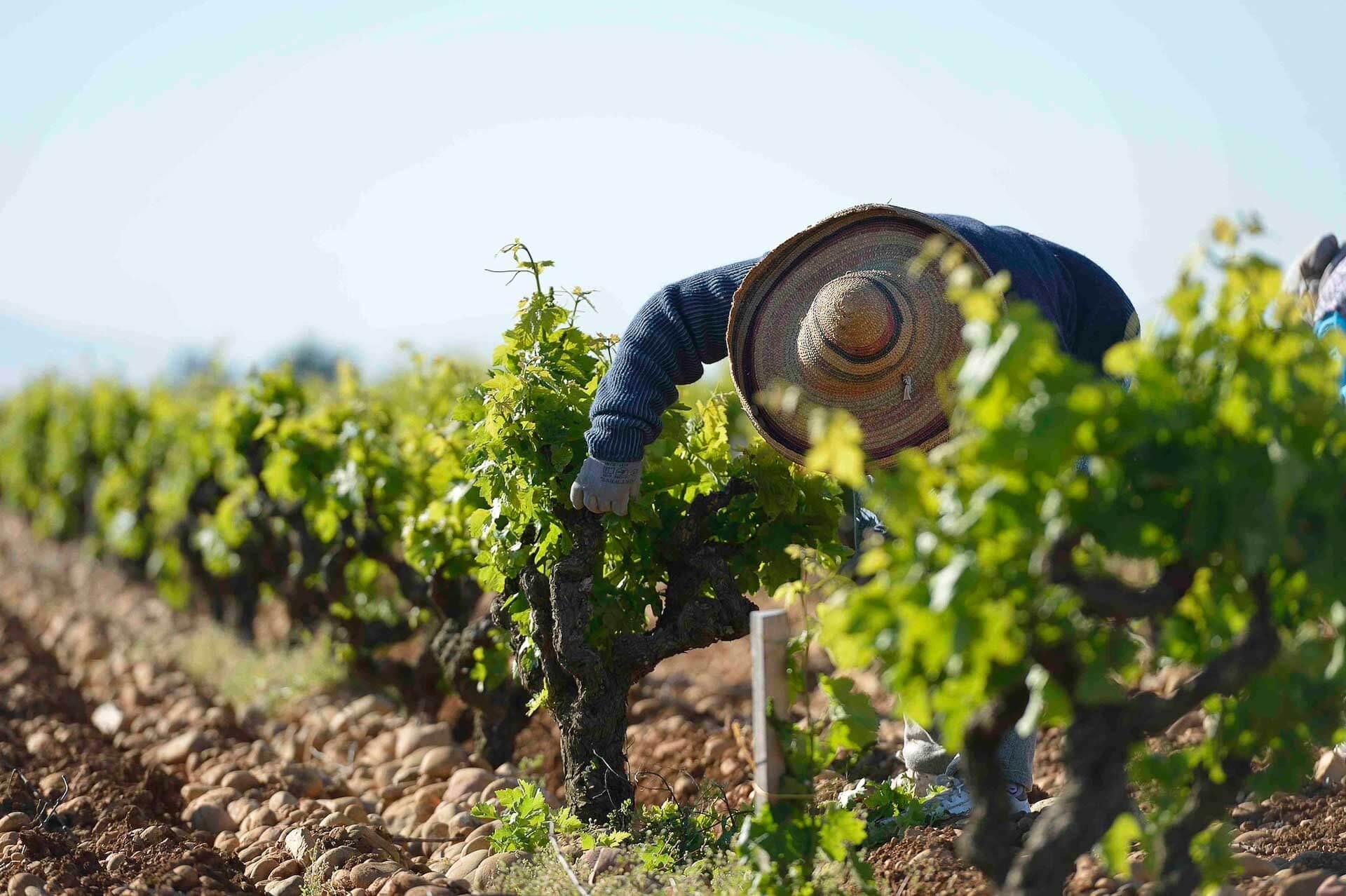 De Châteauneuf-du-Pape à la Route des vins de Provence, suivez notre itinéraire pour un road trip dans les vignobles. Pendant trois jours, découvrez les meilleurs hôtels, domaines, restaurants et sites à visiter dans la région, le temps d'un week-end épicurien.