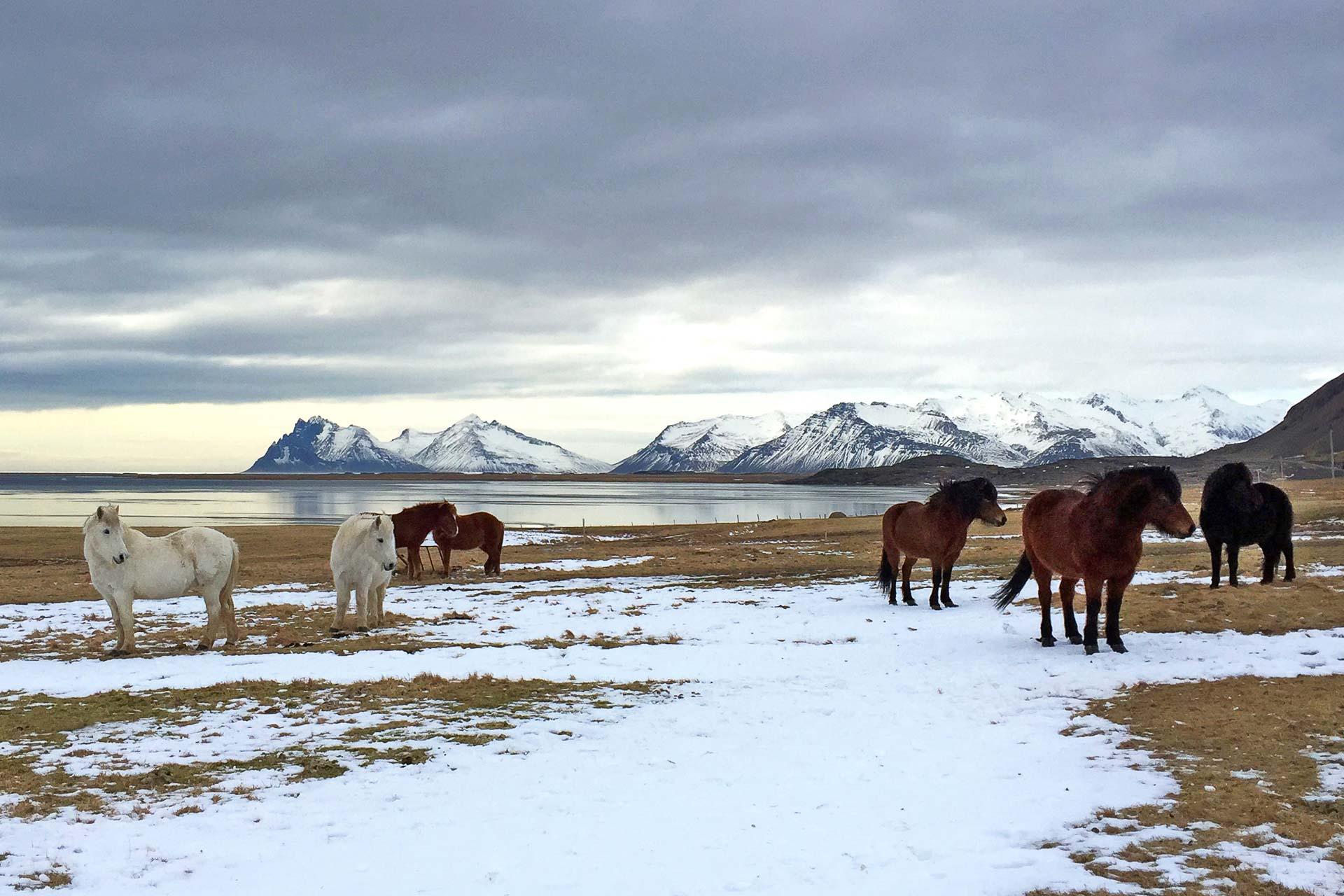 L'enseigne Six Senses Hotels Resorts Spas, spécialiste de l'ultra luxe durable et du bien-être, a annoncé l'ouverture en 2022 d'un hôtel de luxe dans un pays qui connaît un développement sans précédent de son tourisme, l'Islande.