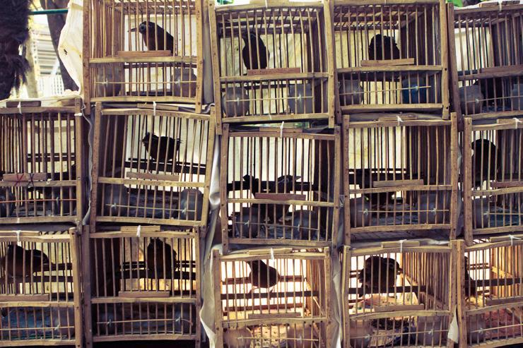 Yuen Po Street Bird Garden - Les cages à oiseaux