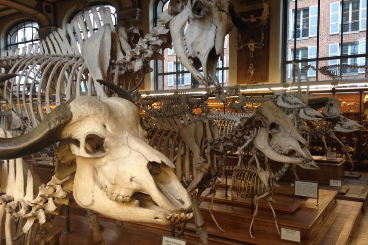 Galeries d'anatomie comparée et de Paléontologie - Muséum National d'Histoire Naturelle