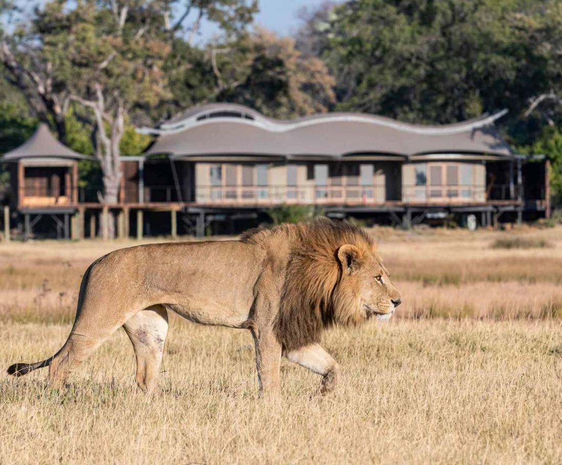La réserve du delta de l'Okavango est reconnue pour sa forte biodiversité