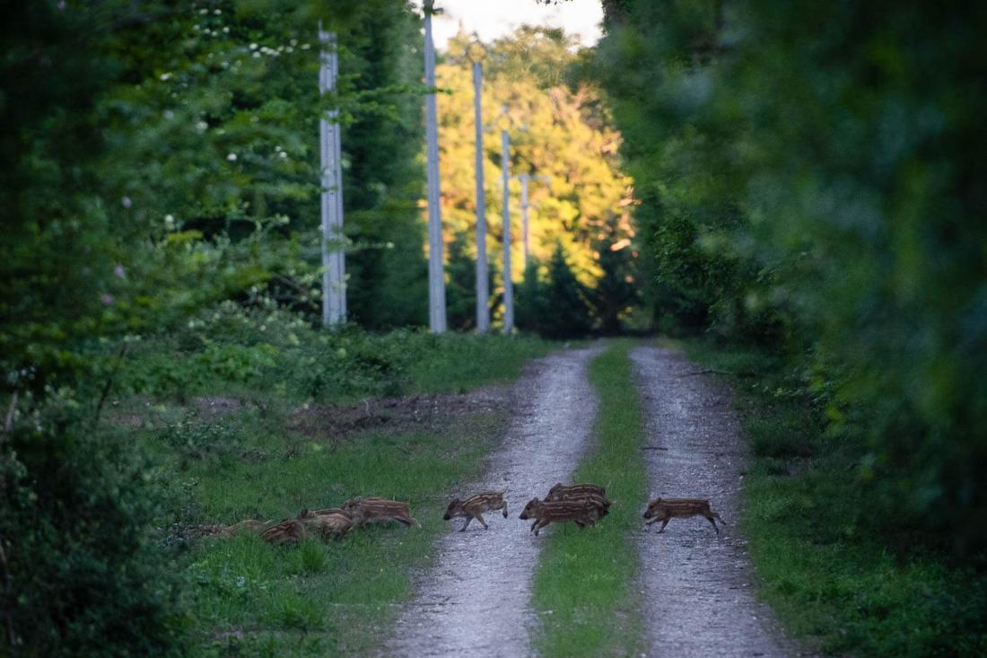 On se perd dans les chemins qui traversent la forêt et croisent sa faune