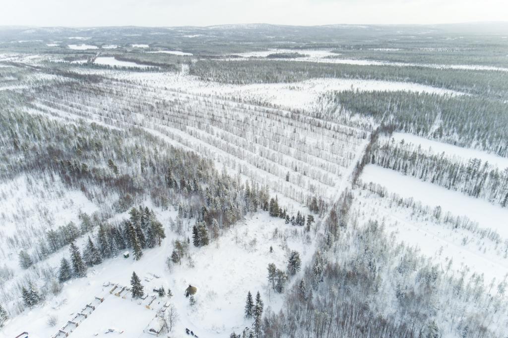 Vue aérienne de la ferme à huskies Kota-Husky et de la forêt environnante.