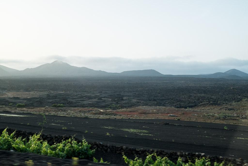 La Geria. Lanzarote.