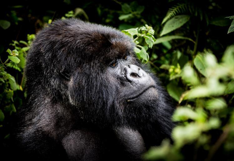 Rwanda : luxe et nature préservée en Afrique de l'Est