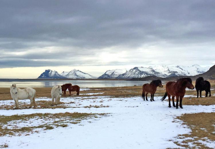 Islande : Six Senses ouvrira un hôtel de luxe en pleine nature, sur la côte sud-est, en 2022