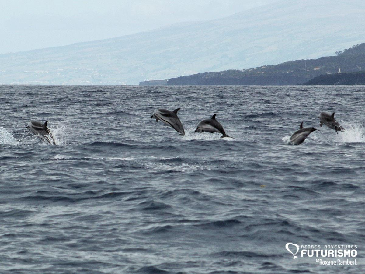 Il est tellement facile de voir des dauphins que la compagnie offre un autre tour en bateau si l'on en voit pas © Roxane Rambert