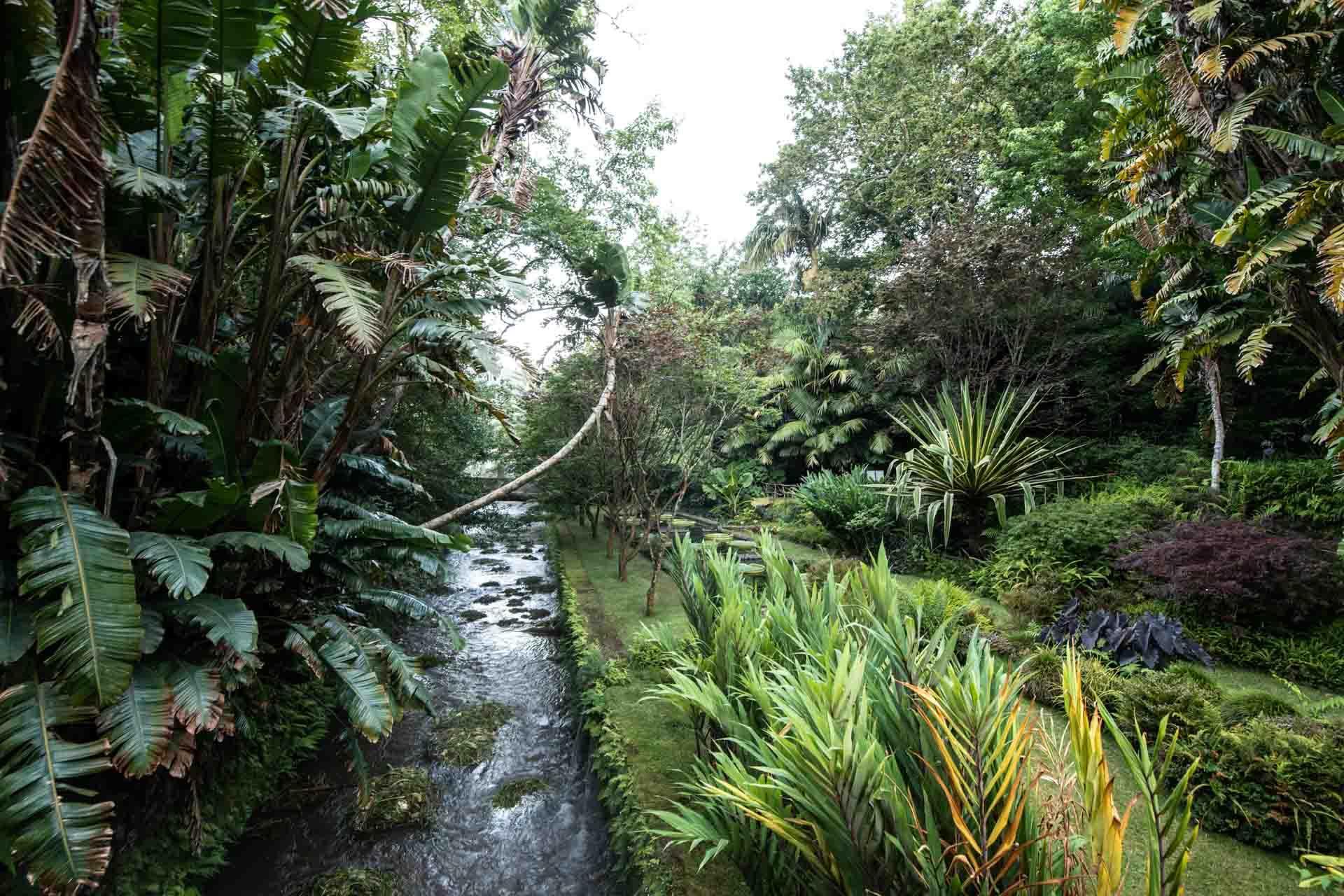 Le Parque Terra Nostra et sa végétation luxuriante © VisitAzores
