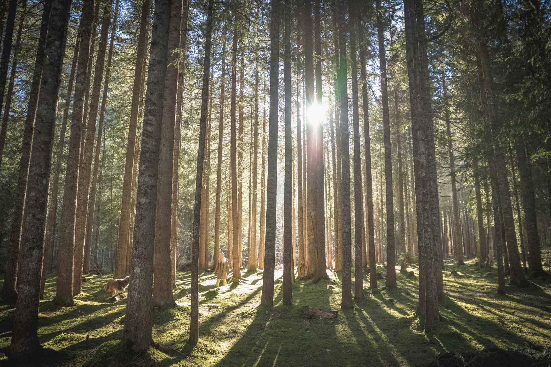 Baignade en forêt au Saanenwald.