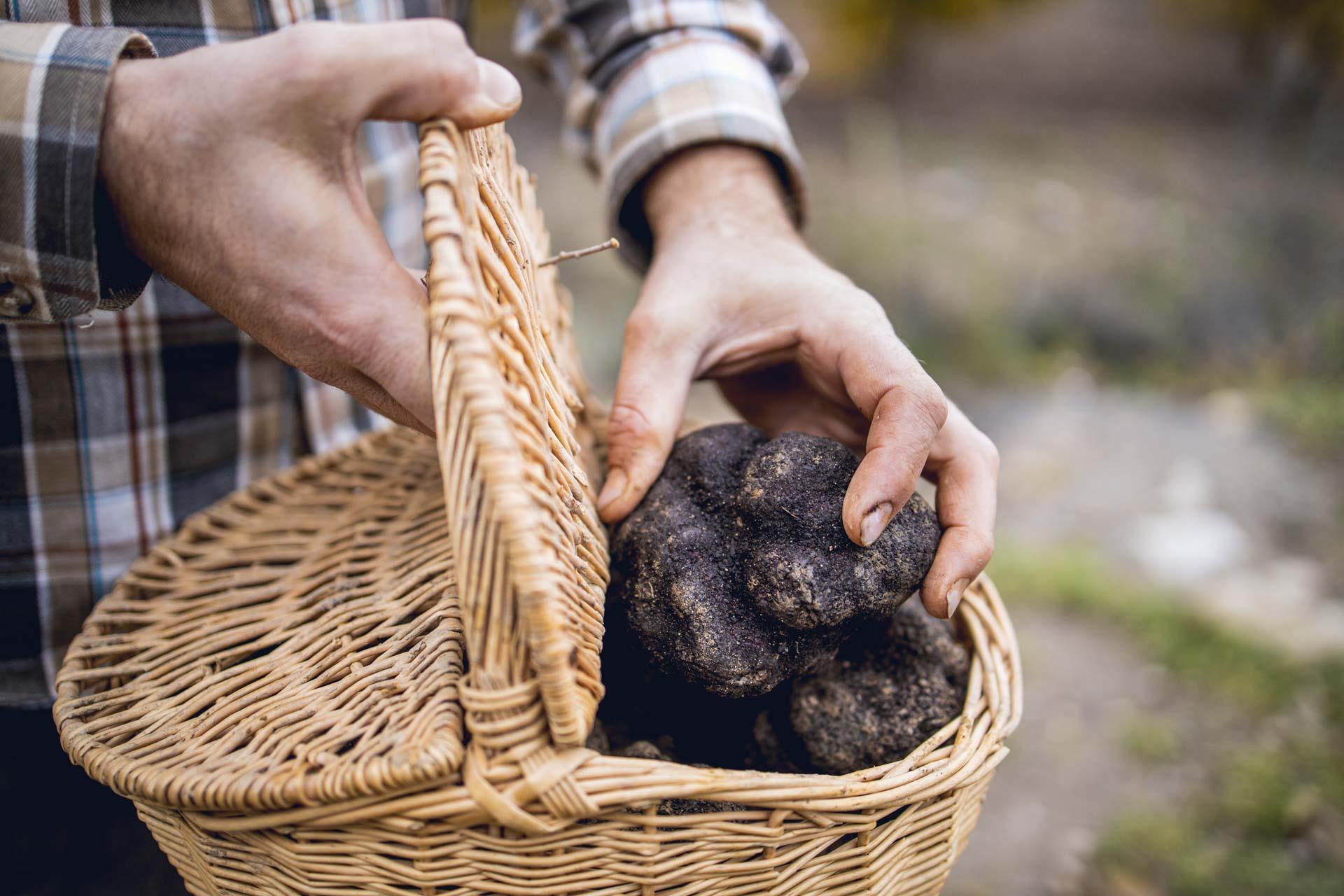 Récolte des truffes dans la Meuse © Artipair