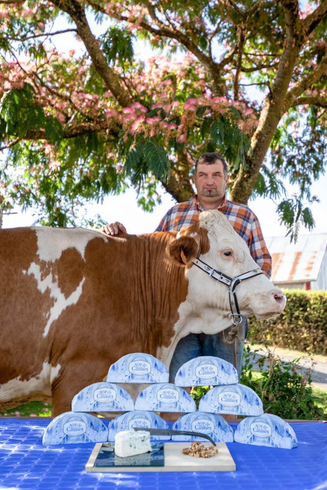 Le lait de vaches est à la base de la préparation du Bleu des Causses © DR