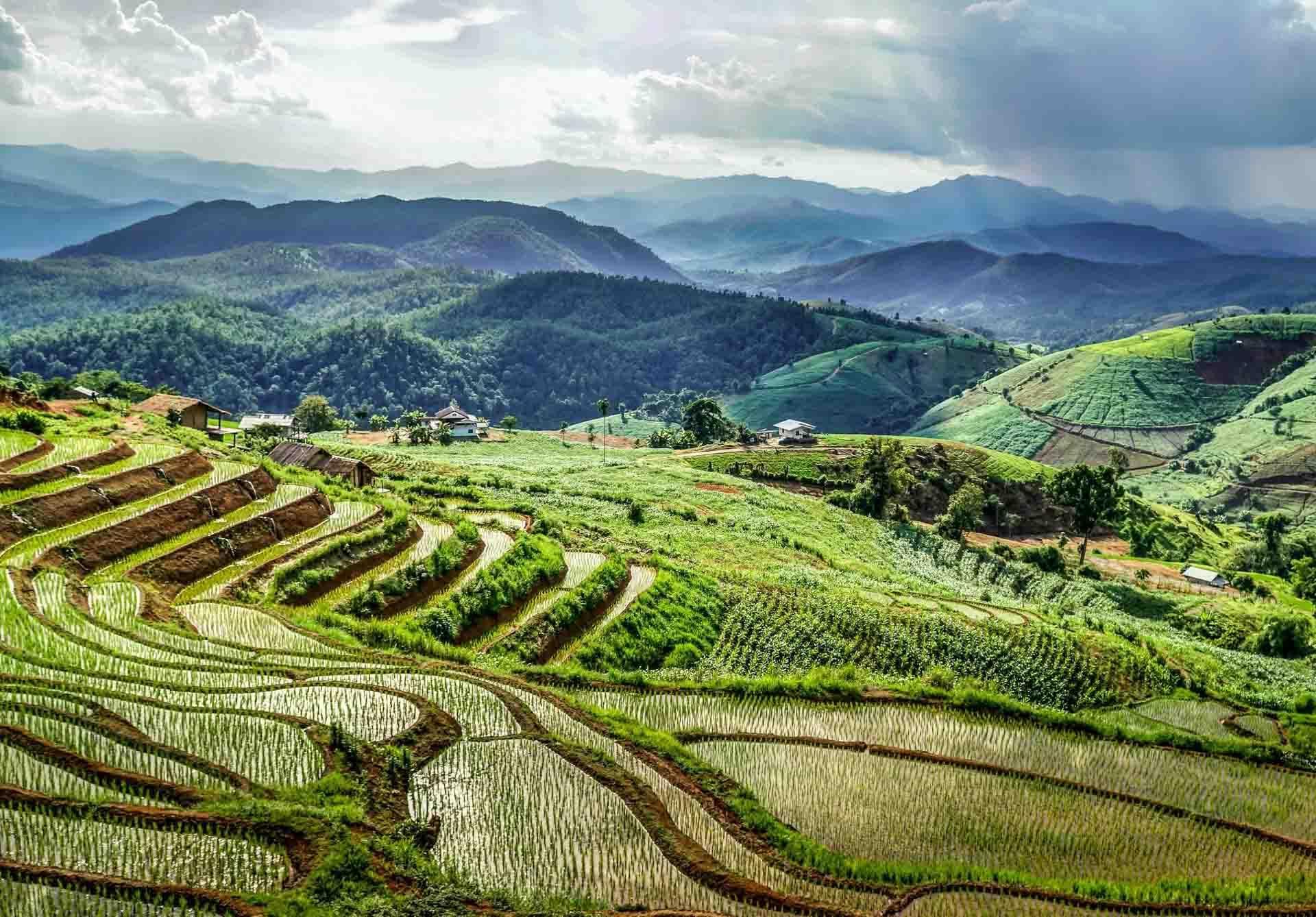 Les rizières de Papongpeang près de Chiang Mai © David Gardiner