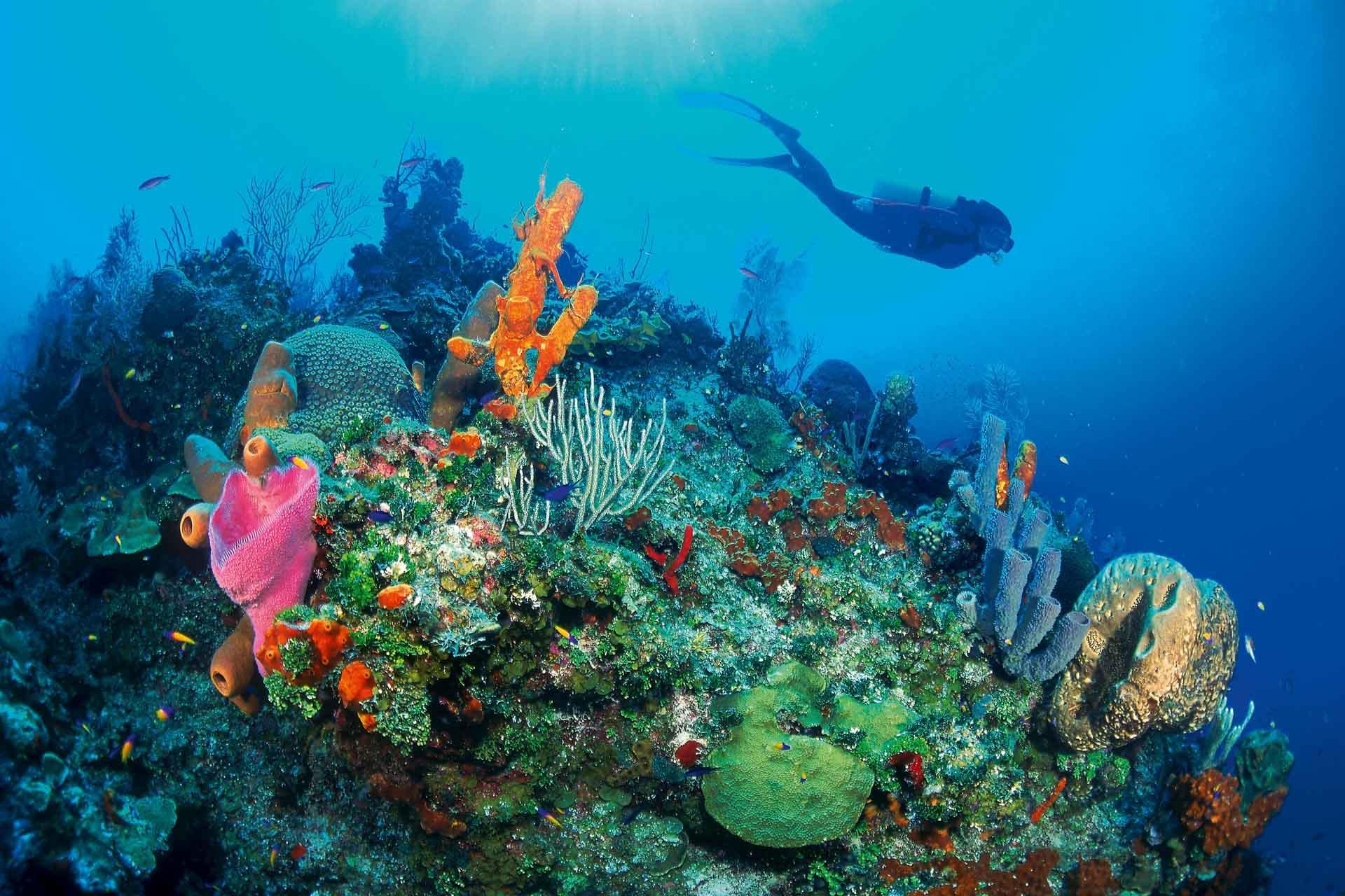 Une plongée dans les récifs caribéens est l'occasion de découvrir des fonds préservés © DR