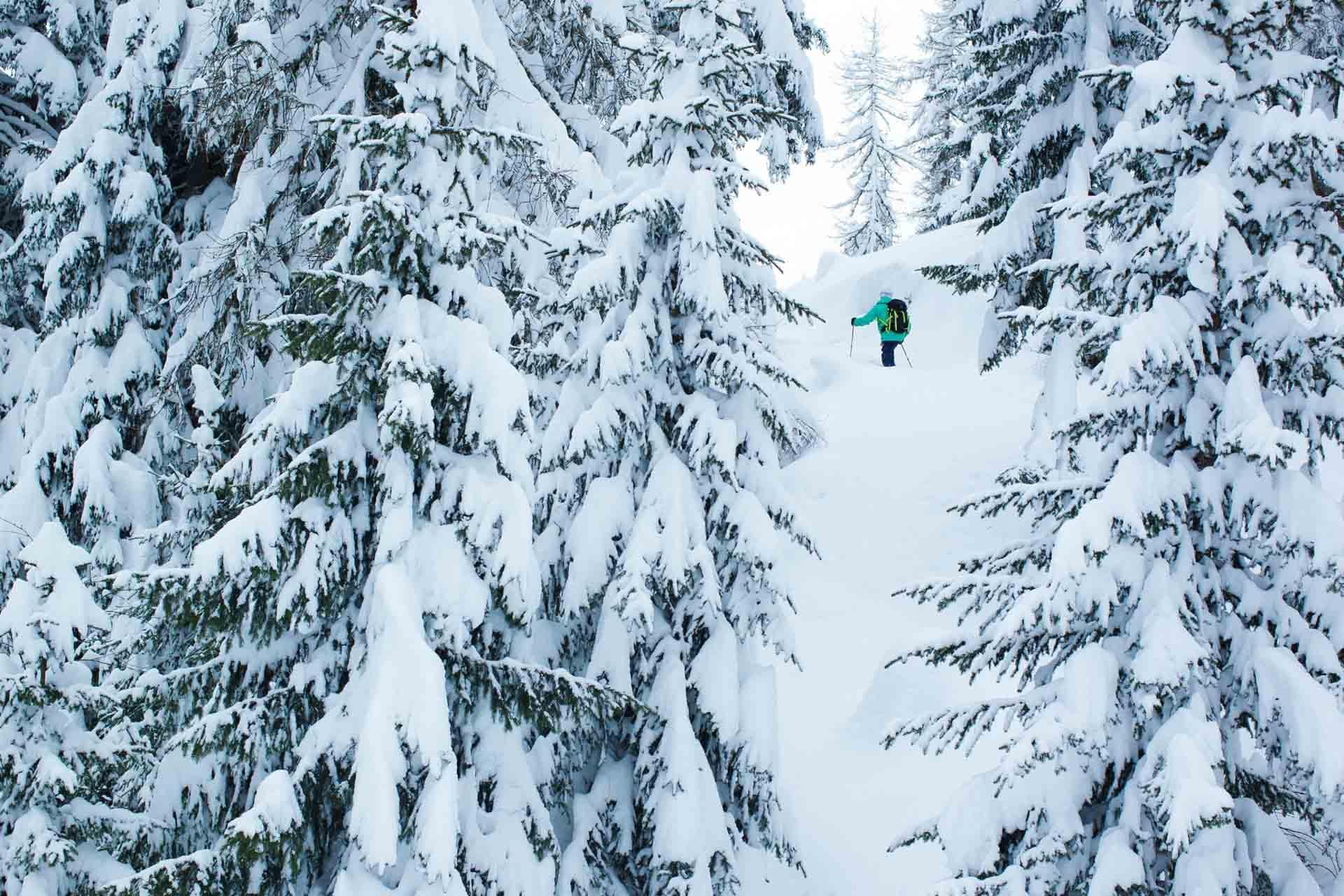 Le ski de randonnée à travers les sapins, avant une descente bien méritée © Elina Sirparanta
