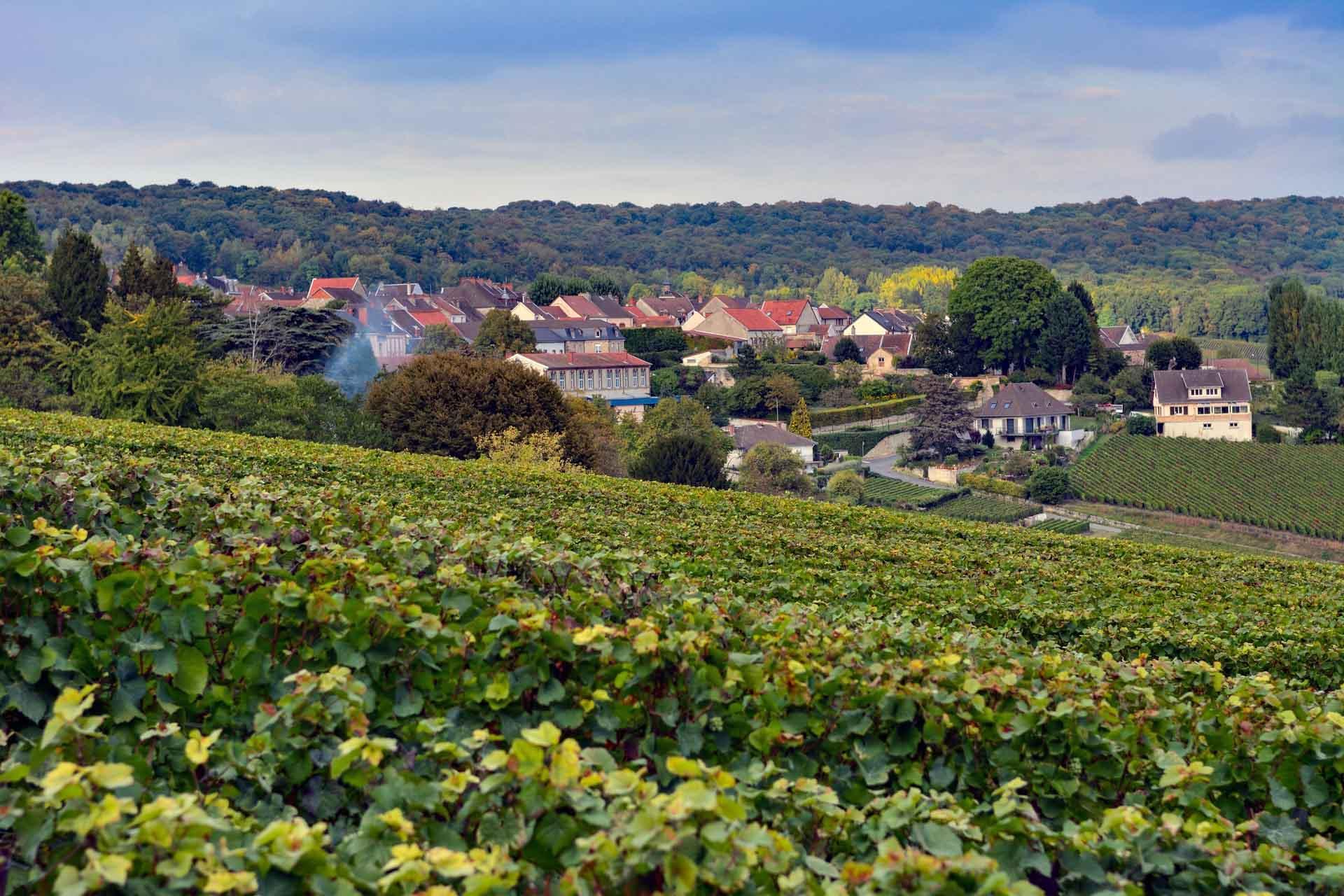 Décor typique de la Montagne de Reims, ici dans la zone d'Hautvillers © adobestock - Sergii Zinko