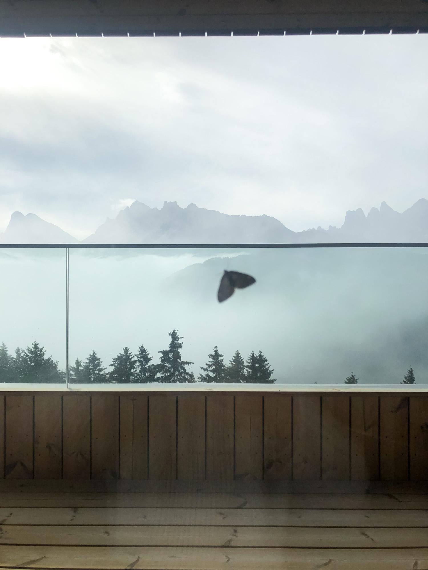 Un papillon s'est posé sur la vitre intérieure d'une Tower Suite. © Raluca Ilie