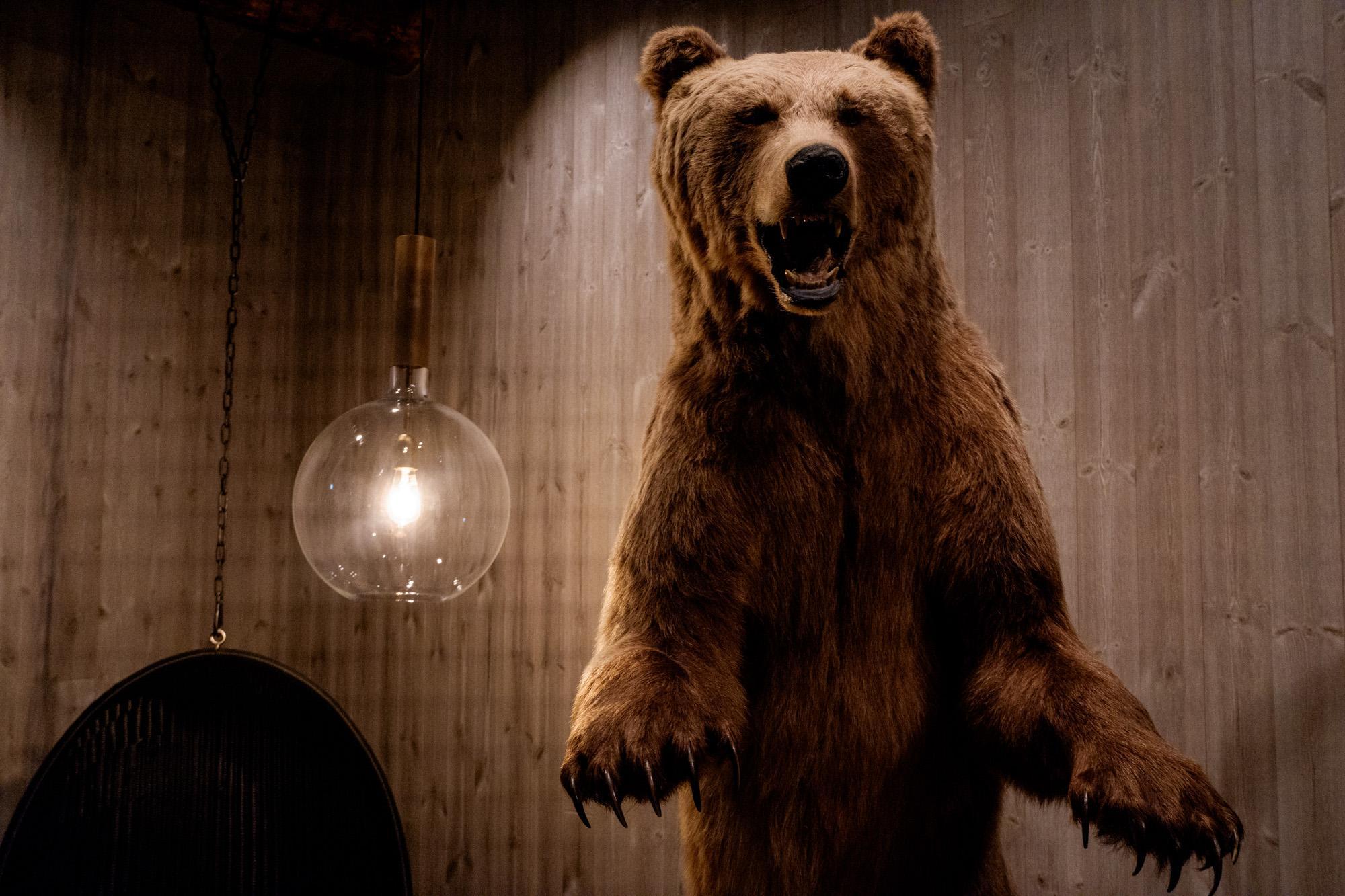 L'ours empaillé est à la mode. Celui-ci a cependant une histoire bien particulière. Tué en légitime-défense par un vieil homme parti à la chasse, l'ours fut offert à un fameux joueur de hockey suédois qui décida de le donner à l'hôtel.