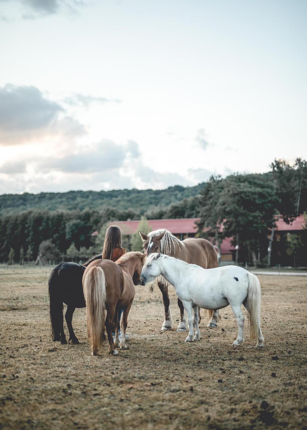 Hôtel Le Barn – Les chevaux © Nomades