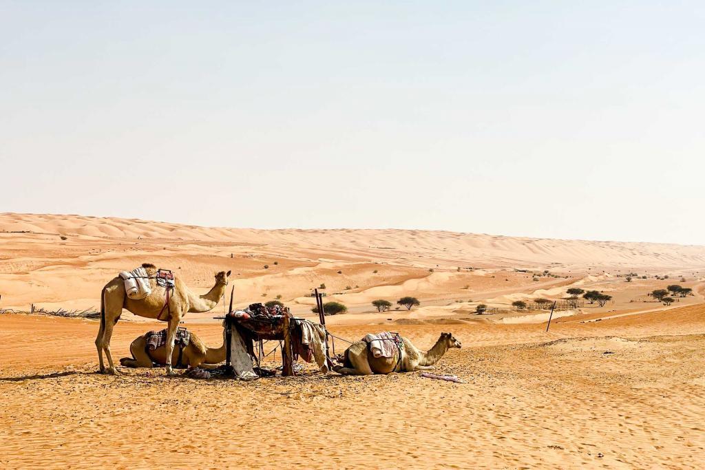 Wahiba Sands. © Emmanuel Laveran.