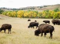 Roadtrip aux USA : les merveilles méconnues du Dakota du Sud