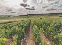 Visiter la Champagne : 10 expériences incontournables à vivre