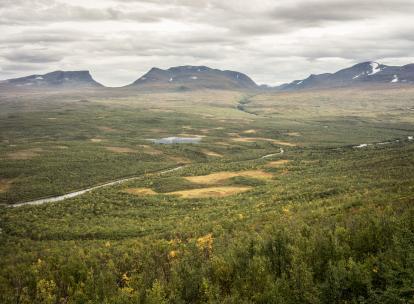 Laponie suédoise en été : les merveilles du parc national d'Abisko