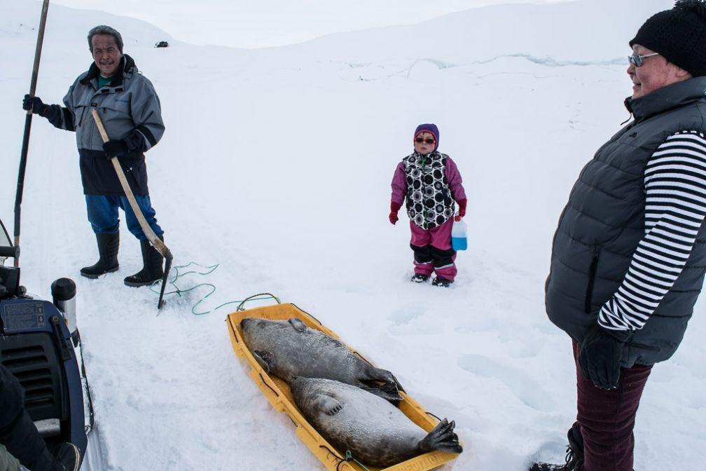 Des habitants de Tiniteqilaaq ramènent des phoques capturés au filet.