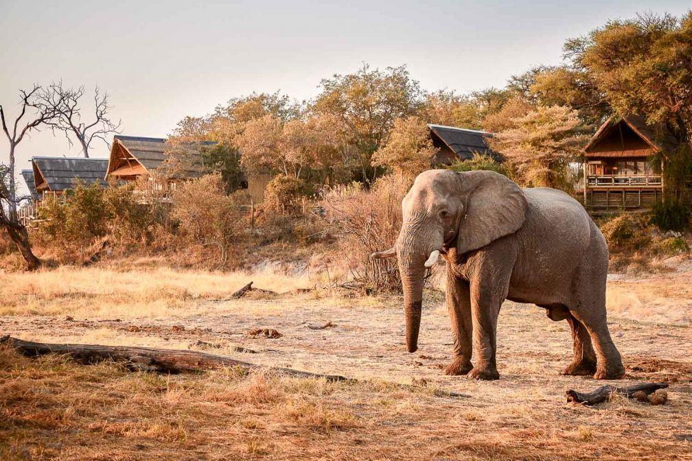 Au Savute Elephant Lodge, les éléphants viennent boire au point d'eau de l'aube au coucher du soleil © Belmond