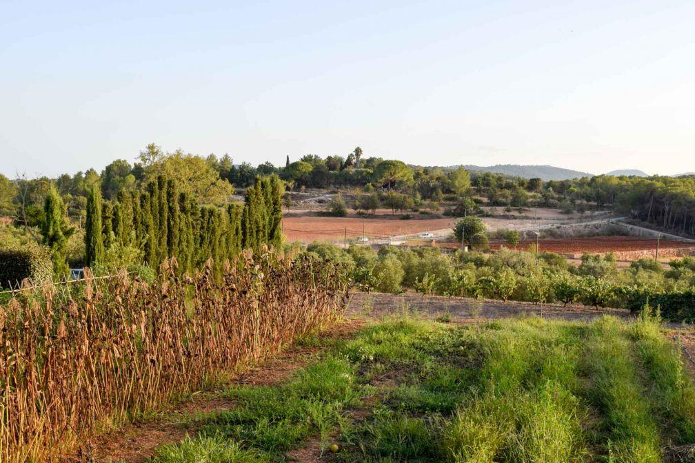 Terre ocre, cyprès et cultures, un paysage typique de la campagne à Ibiza | © YONDER.fr