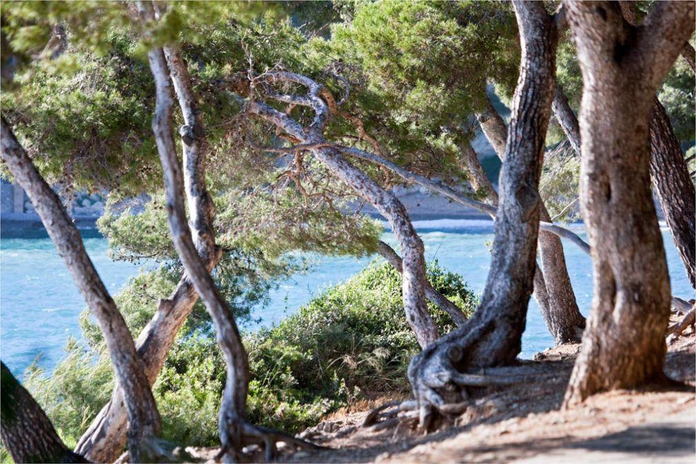 La pinède, végétation caractéristique de la région © OT Saint-Jean-Cap-Ferrat