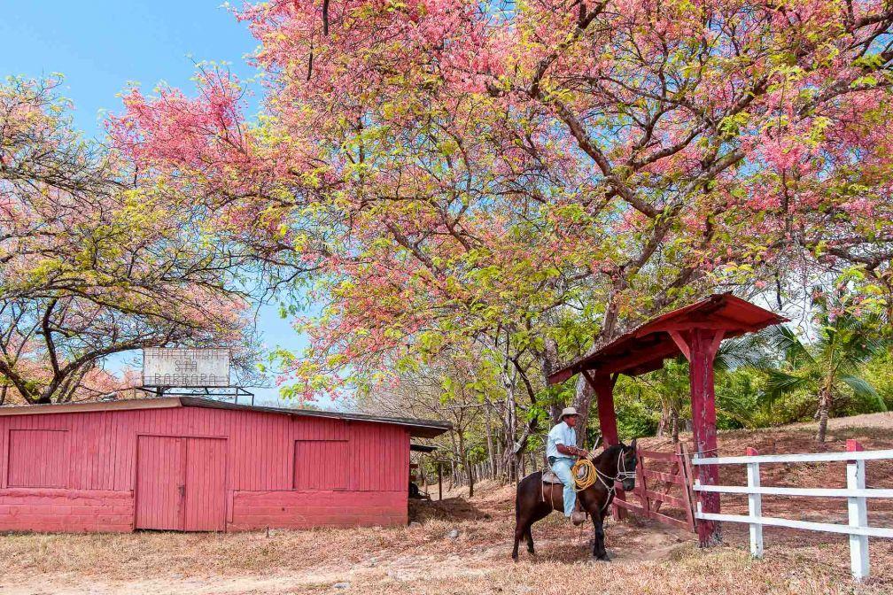 Les sabaneros sont les cowboys du Costa Rica. Ils sont encore nombreux dans la province du Guanacaste © DR