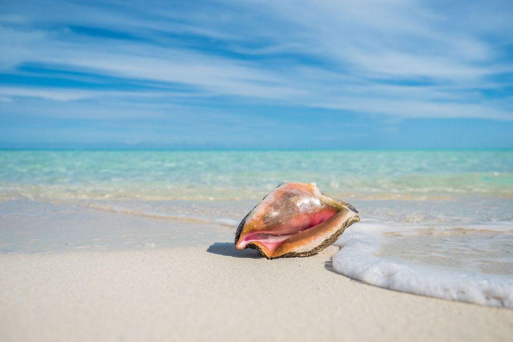 Plages de sable blanc et eaux cristallines au sein de la Réserve Marine MSC Ocean Cay © DR