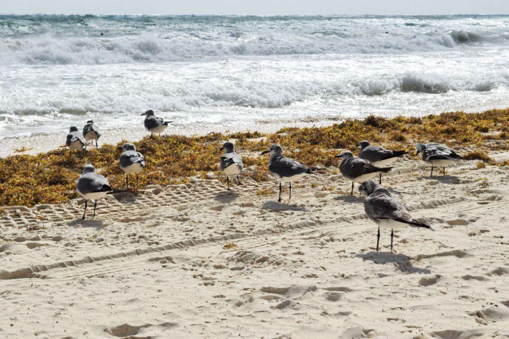 Iguanes, perroquets, marsupiaux et oiseaux sur la plage : la faune est chez elle ici © Yonder.fr