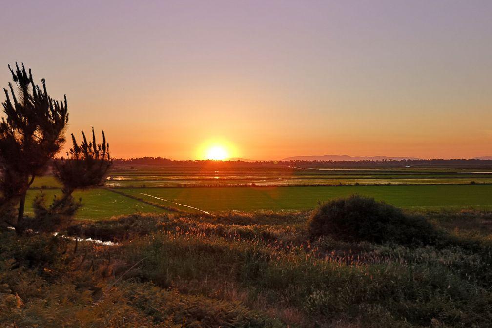 Coucher de soleil sur les rizières de Comporte © Alma da Comporta