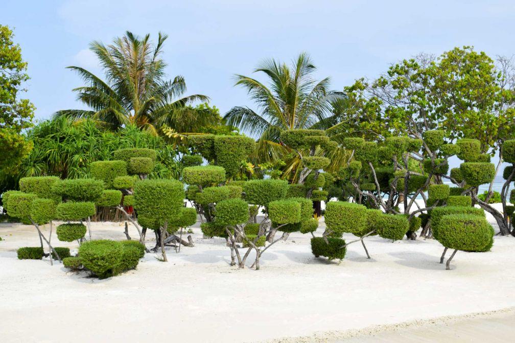 Même les arbres ont fait l'objet d'une attention toute particulière © YONDER.fr