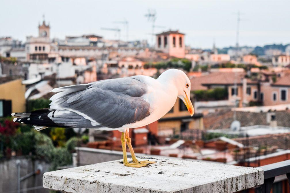 Mouette aperçue sur le rooftop © Yonder.fr