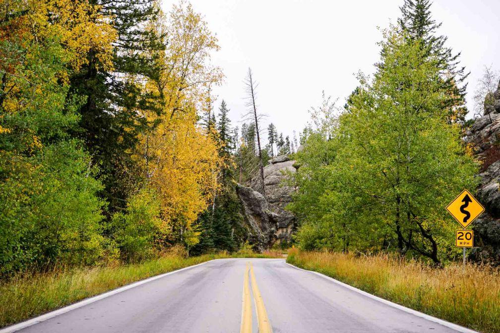 Sur une route du Custer State Park.