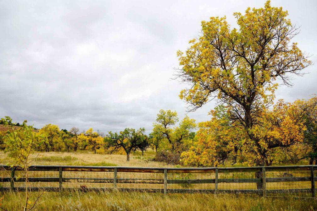 Couleurs automnales dans le Custer State Park.