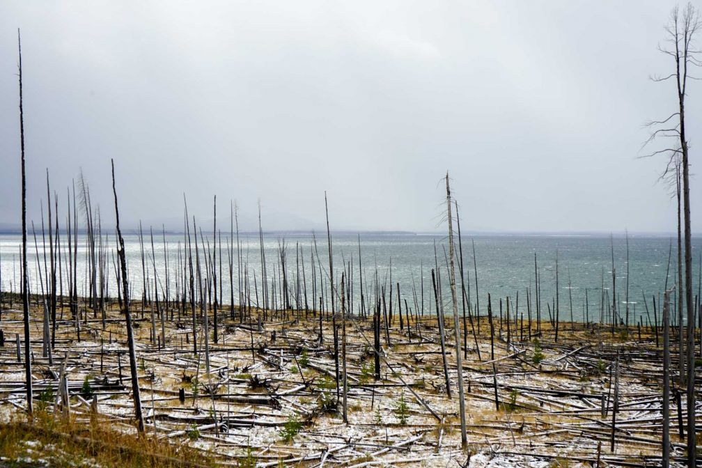 Le long du Yellowstone Lake, en direction de l'East Entrance du parc © YONDER.fr