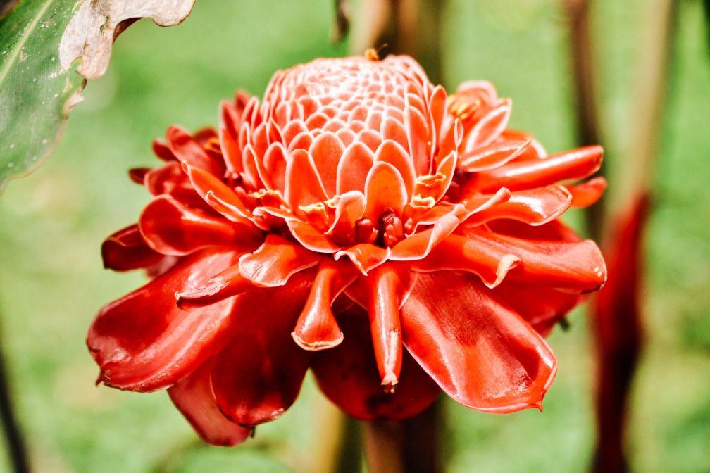 Les fleurs du Jardin botanique Lankester à Cartago © Constance Lugger