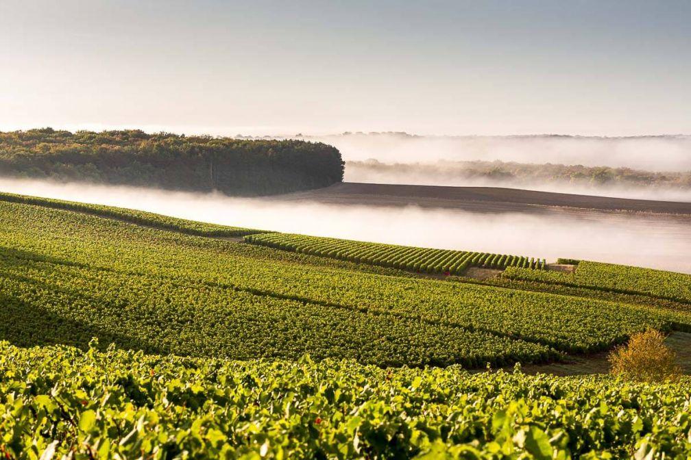 Parcourir les vignes du Champagne Dumont, découvrir son élaboration et déguster le précieux vin effervescent © L'Empreinte des fées